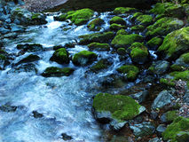Blue creek with moss covered rocks. Water flowing and creating white streaks Royalty Free Stock Photo