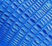 Blue crocodile skin texture Stock Image
