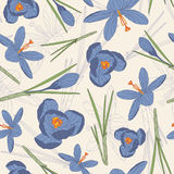 Blue crocuses Royalty Free Stock Images
