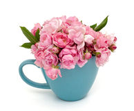 Blue cup full of small pink roses over white Royalty Free Stock Photos