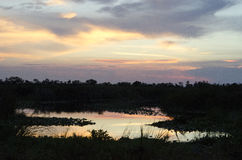 Blue Cypress Conservation Area at Dusk Royalty Free Stock Photography