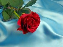 blue czerwona róża Obrazy Stock