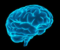 Blue 3d human brain model Royalty Free Stock Images