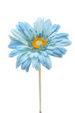 Blue daisy Royalty Free Stock Photography