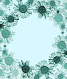 Blue daisy frame. Stock Photos