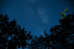 Blue dark night sky with many stars above field of trees. Stock Image