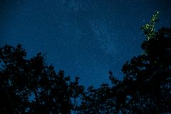 Blue dark night sky with many stars above field of trees. Stock Photography