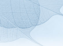 Blue decorative leaves royalty free stock photo