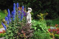 Blue delphinium garden Royalty Free Stock Images