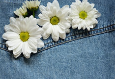 Blue denim and daisies Royalty Free Stock Image