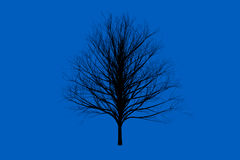 Blue die tree color Silhouettes art design Royalty Free Stock Image