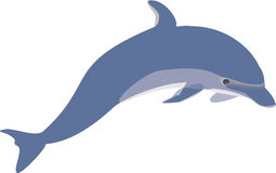 Blue Dolphin Royalty Free Stock Photo