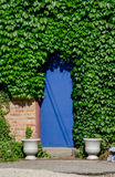 Blue door and ivy Stock Photos
