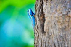 Blue dragon climb the tree on colorful background Stock Photos