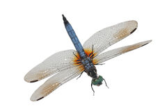 Free Blue Dragonfly Royalty Free Stock Images - 6071719