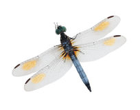 Free Blue Dragonfly Stock Photo - 6080450