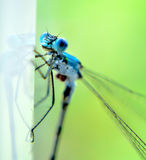 Blue dragonfly closeup Stock Image