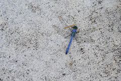 A Blue dragonfly on ground Stock Photos