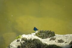 Blue dragonfly at the river Leiblach