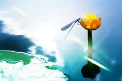 A blue dragonfly on a yellow water lily against the background of a watery surface. Artistic image. Royalty Free Stock Image