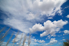 Blue dramatic sky in winter with leafless poplar Royalty Free Stock Photos