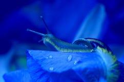 Blue dreams... Royalty Free Stock Photos