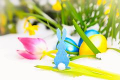 Blue easter bunny, tulip and eggs in the snow.  Royalty Free Stock Images