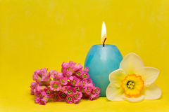 Blue easter cande with   narcissus  and bergenia Stock Image