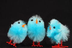 Blue Easter chicks Royalty Free Stock Photography