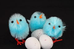 Blue Easter chicks and eggs Stock Images