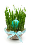 Blue easter egg in grass decoration isolated Royalty Free Stock Images