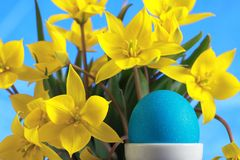 Blue easter egg and yellow tulips Stock Photography