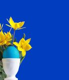 Blue easter egg and yellow tulips Stock Images