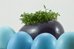 Blue easter eggs with fresh cress Royalty Free Stock Photos