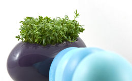 Blue easter eggs with fresh cress Royalty Free Stock Photo