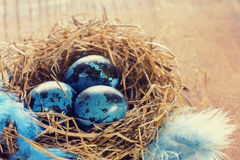 Blue easter eggs in nest Royalty Free Stock Image