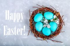 Blue easter eggs in a nest with white flowers on a gray concrete background. Blue easter eggs in a nest with white flowers on a gray concrete background royalty free stock photography
