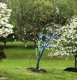 Blue Easter Tree. Amid the blooming colors of Spring in East Tennessee, a neighbor with a sense of humor painted a small tree blue and decorated it with plastic Royalty Free Stock Images