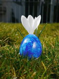 Blue egg on meadow with crocusses Royalty Free Stock Image