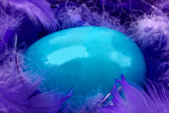 Blue Egg in Purple Feathers Stock Photography