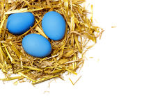 Blue eggs in a nest of straw isolated on white background Stock Photos