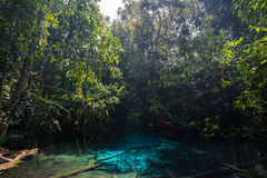 Blue emerald pond in the forest Stock Photography