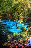 Blue or emerald pool in National park Sa Morakot, Krabi, Thailand. Fantastic blue lake in the middle of the rain forest. Royalty Free Stock Photo