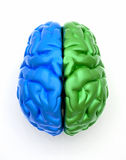 Blue end green brain Stock Photography