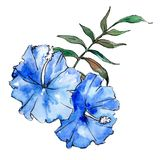 Blue exotic tropical hawaiian flowers. Watercolor background set. Isolated flower illustration element. Blue exotic tropical hawaiian floral botanical flowers vector illustration