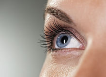 Blue eye. On grey background (shallow DoF royalty free stock photo