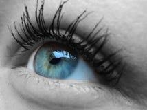 Blue eye. Female eye in black and white with blue iris Royalty Free Stock Photo