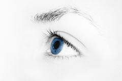 Blue eye. Blue woman's eye in black and white Royalty Free Stock Photography