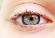 Blue eye. Photo of a woman eye Stock Image