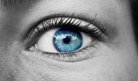Blue eye. Beautiful blue eye Stock Images
